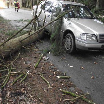 Baum schlug vor PKW – Fahrer überfuhr Baum